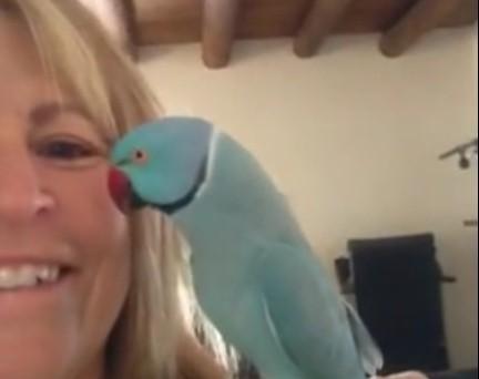 Hast du einen Vogel?
